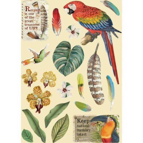 Fafigura, A5 - Amazónia papagáj